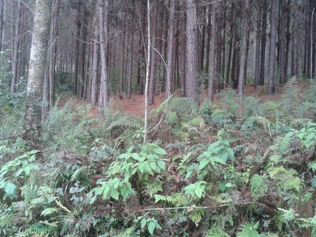 Área própria para chácara à 15 km de Gramado-RS - Foto 3