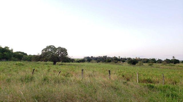 Belíssima fazenda com 295 há em ceara mirim, curral, casas, rio perene,poço - Foto 3