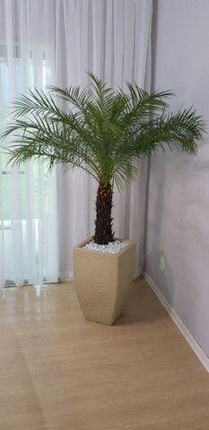 Palmeira fênix natural com vaso - Foto 2