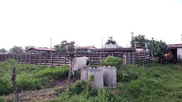 Belíssima fazenda com 295 há em ceara mirim, curral, casas, rio perene,poço - Foto 19