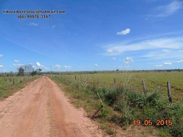 Fazenda 2.420 hectares vale do xingu mt nikolaiimoveis