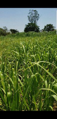 Carretel de irrigação Irrigat.  - Foto 3