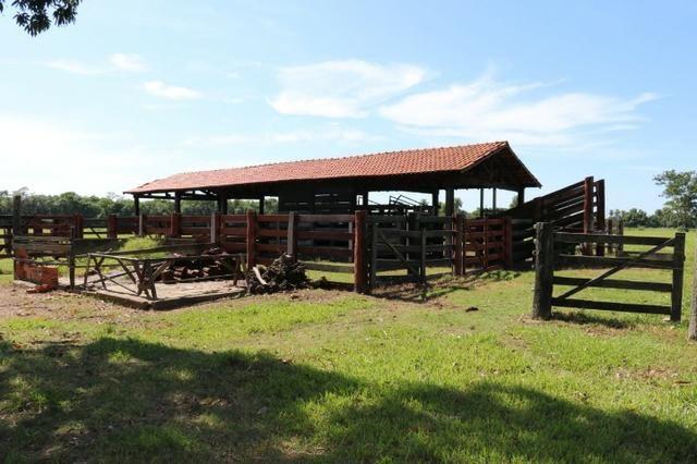 Chácara na região de Santo Antônio de Cuiabá com 32 HA Uma propriedade dos sonhos a 25 - Foto 13