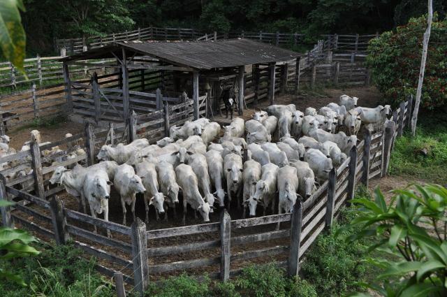 Vendo Fazenda com 1.110 alqueires Localizada em Teófilo Otoni-Mg - Foto 4