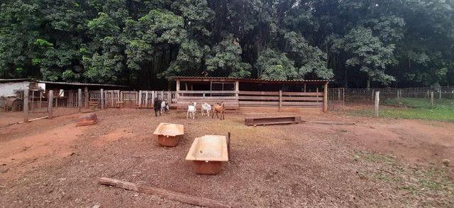 Chácara Campo Belo de 4.300m2 em Olímpia/SP - Foto 4