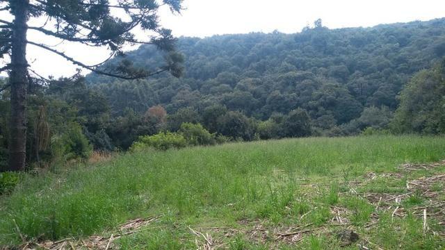 Sítio em Nova Petrópolis com 20,5 hectares - Foto 3