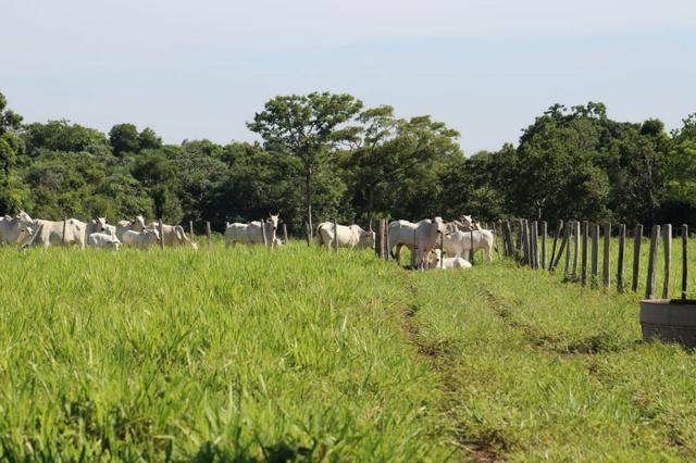 Chácara na região de Santo Antônio de Cuiabá com 32 HA Uma propriedade dos sonhos a 25 - Foto 3
