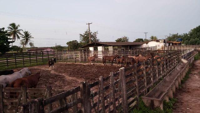 Belíssima fazenda com 295 há em ceara mirim, curral, casas, rio perene,poço - Foto 5