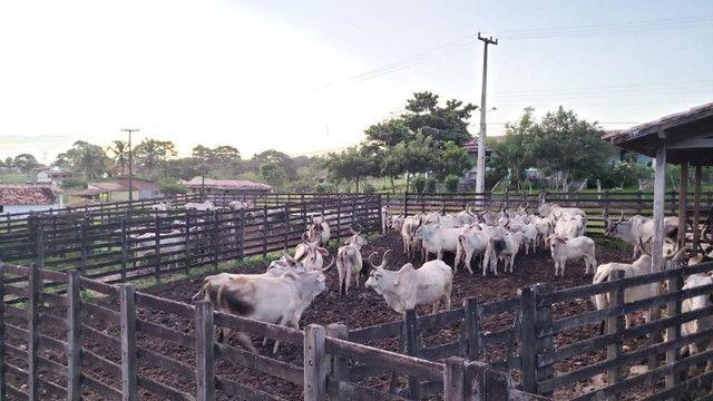 Belíssima fazenda com 295 há em ceara mirim, curral, casas, rio perene,poço - Foto 17