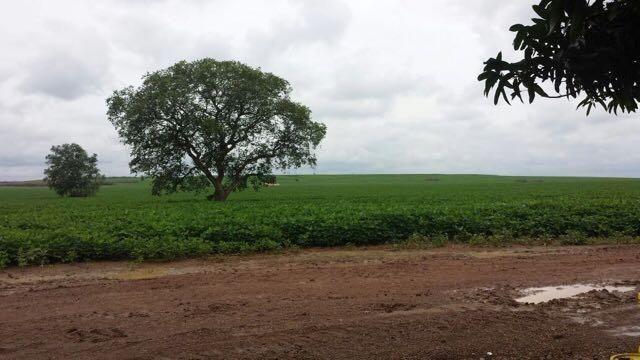 Excelente fazenda em Araguacema -To, com 405 alqueires para grãos