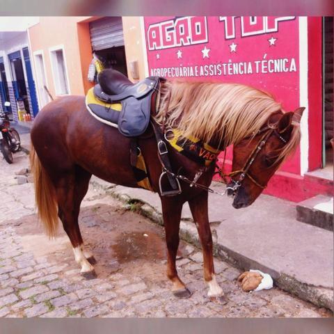 Cavalo com excelente andamento