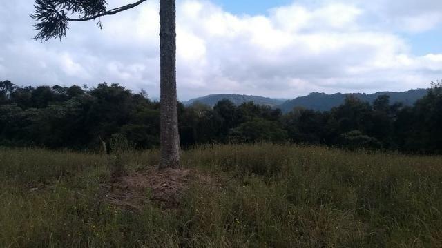 Sítio em Nova Petrópolis com 20,5 hectares - Foto 10