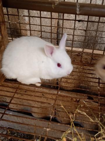 Mini coelhos - Foto 4