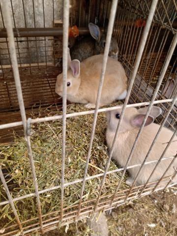Mini coelhos - Foto 5