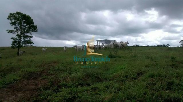 Fazenda em Santa Maria Eterna - Foto 15