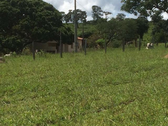 Fazenda 70 alqueires em Anicuns muito boa!!! - Foto 2