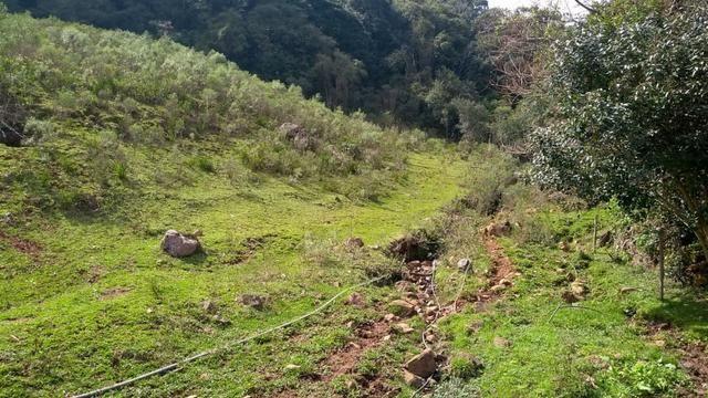 Sítio em Nova Petrópolis com 20,5 hectares - Foto 15
