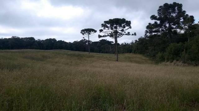 Sítio em Nova Petrópolis com 20,5 hectares - Foto 8