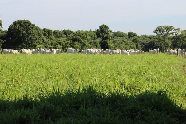 Chácara na região de Santo Antônio de Cuiabá com 32 HA Uma propriedade dos sonhos a 25 - Foto 12