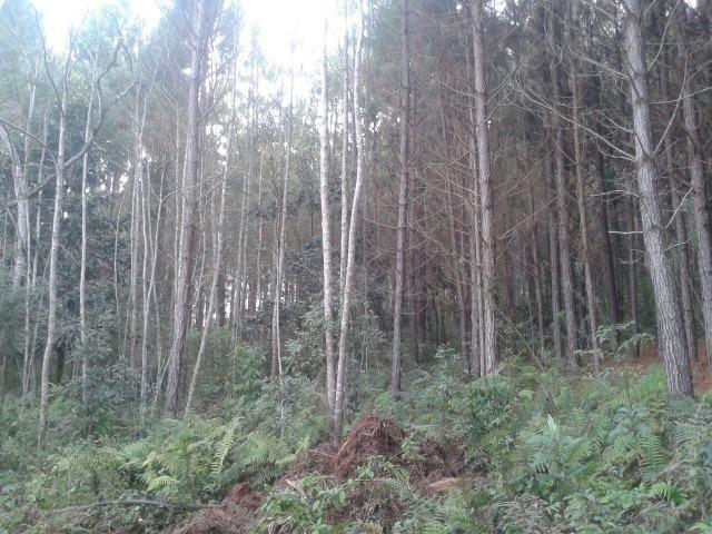 Área própria para chácara à 15 km de Gramado-RS - Foto 7