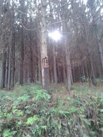 Área própria para chácara à 15 km de Gramado-RS - Foto 2