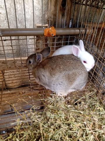 Mini coelhos - Foto 3
