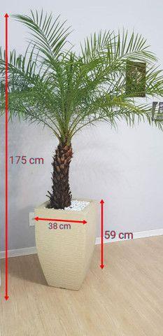 Palmeira fênix natural com vaso - Foto 3