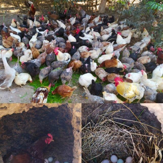 Ovos caipiras - Foto 2