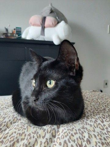 Gatinha Preta para adoção  - Foto 2