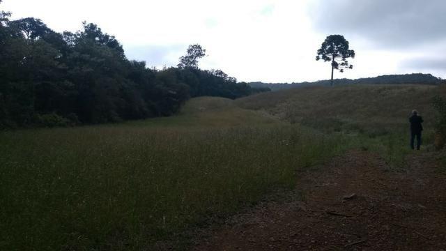 Sítio em Nova Petrópolis com 20,5 hectares - Foto 4
