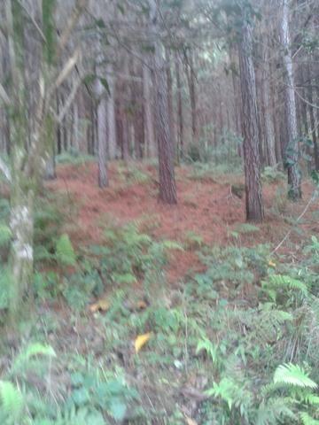 Área própria para chácara à 15 km de Gramado-RS - Foto 5