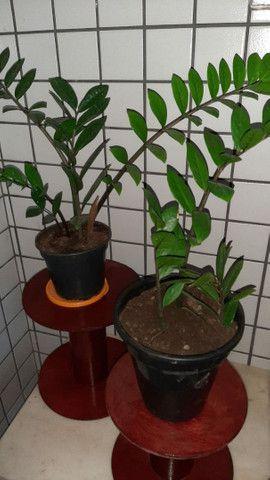 Vende planta  - Foto 2