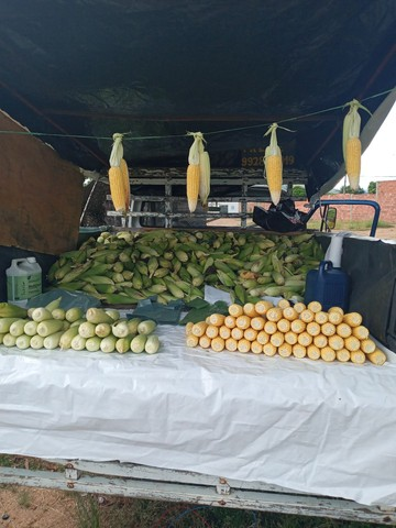 Milho verde para pamonha - Foto 4