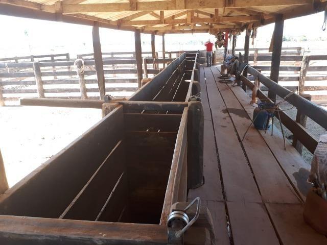Fazenda de 220 alqueire em Novo Mundo -MT - Foto 4