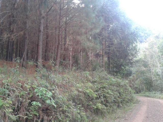 Área própria para chácara à 15 km de Gramado-RS