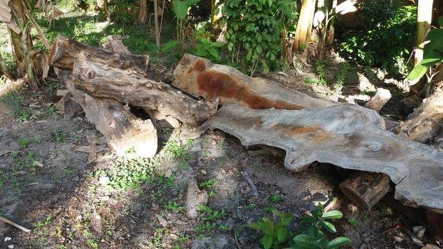 Madeira jaqueira - Foto 3