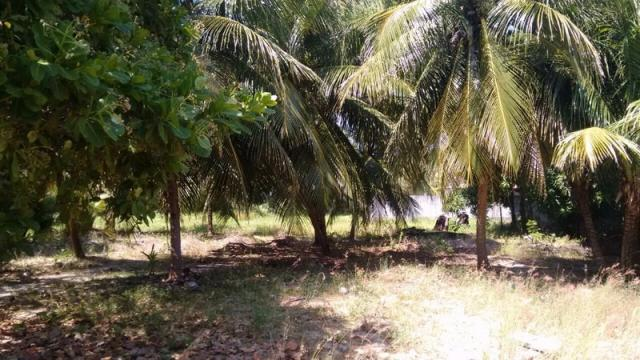 Terreno à venda em Muriú, Ceará-mirim cod:811175 - Foto 6