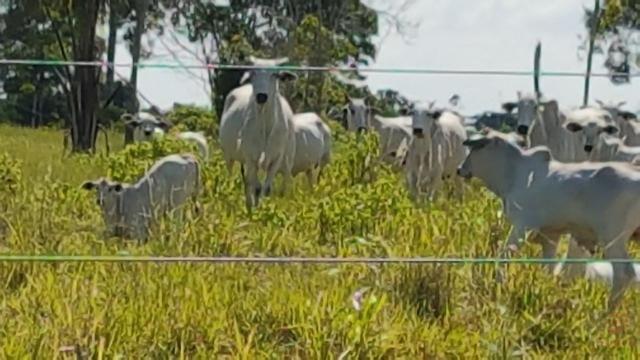 Maravilhosa Fazenda em Barrolândia, Belmonte - BA com 809 Hectares... - Foto 19