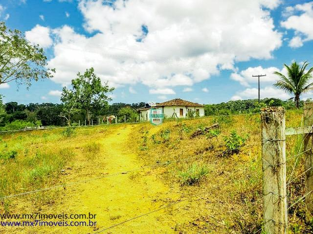 Fazenda mista de cacau e gado. Área de 203 Hectares - Foto 13