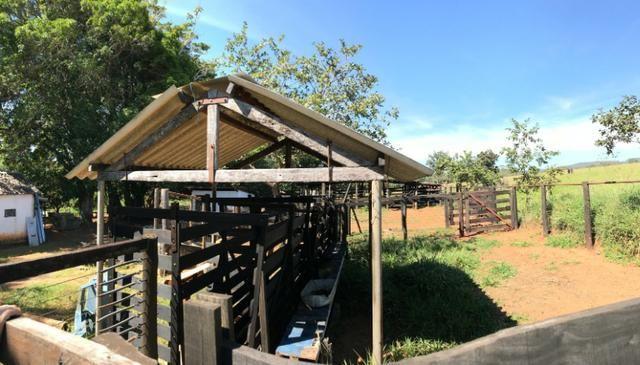 Fazenda 16.5 Alqueires ( 80 ha) Aragoiânia-GO - Foto 5