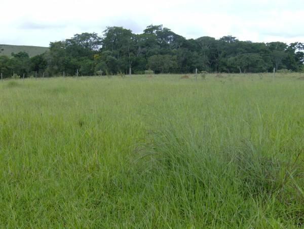 Fazenda escriturada formada ao lado de Brasília troca 61 9  * - Foto 5