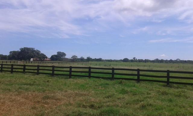 8271 | fazenda à venda em poconé mt - Foto 5