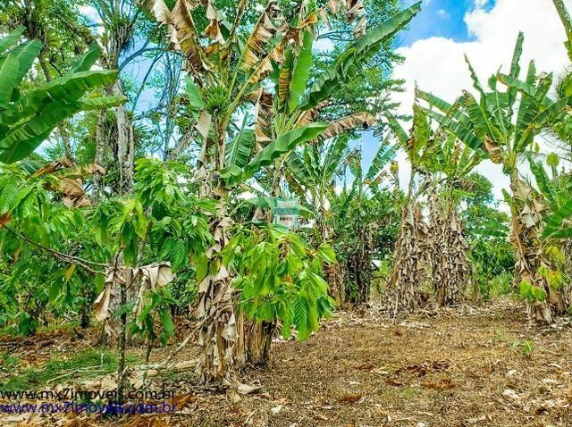 Fazenda mista de cacau e gado. Área de 203 Hectares - Foto 19