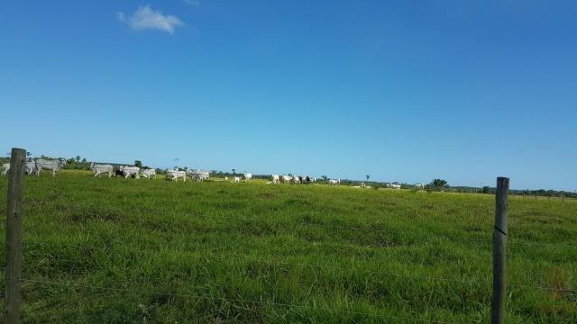 Maravilhosa Fazenda em Barrolândia, Belmonte - BA com 809 Hectares...