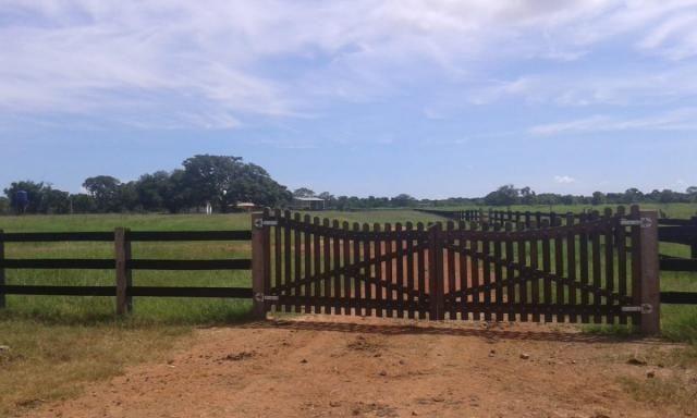 8271 | fazenda à venda em poconé mt - Foto 3