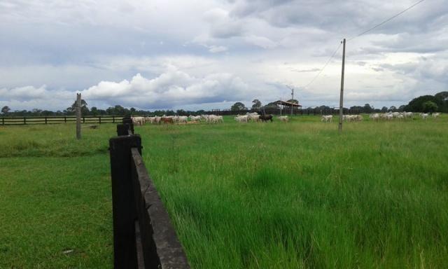 8271 | fazenda à venda em poconé mt - Foto 6