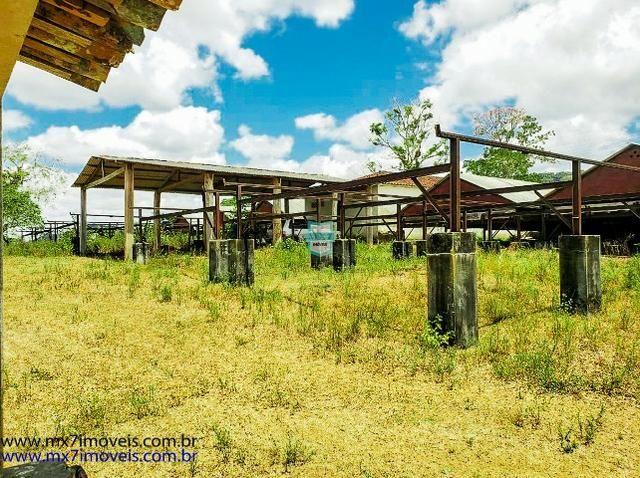 Fazenda mista de cacau e gado. Área de 203 Hectares - Foto 8
