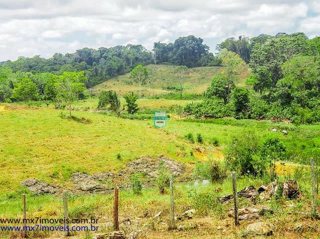 Fazenda mista de cacau e gado. Área de 203 Hectares - Foto 12