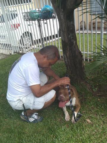 Passeador e Adestrador de cães - Foto 3