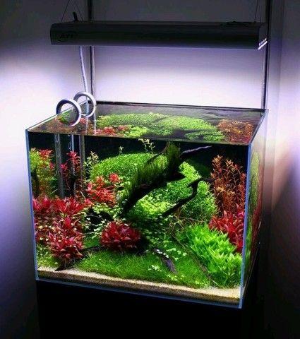 Monte seu aquário conosco Niterói  - Foto 4